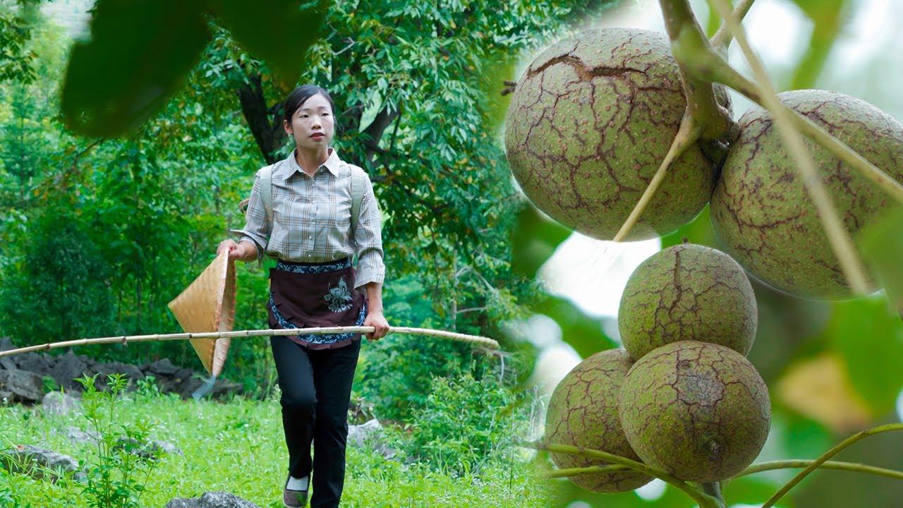 破殼而出的美味,不到秋天它是不會跳出來的【核桃】Country girl, picking walnuts back to make a variety of food|野小妹 wild girl