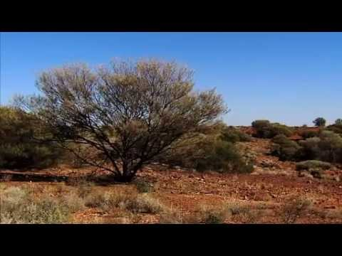 Sydney Weekender in outback NSW at Paroo-Darling National Park