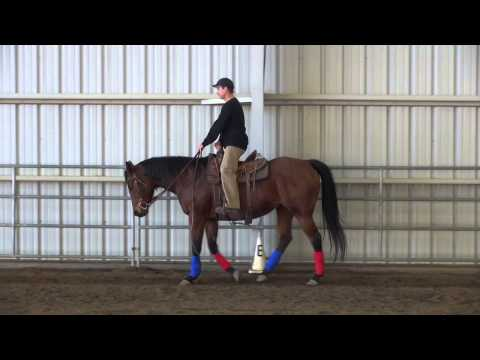 Posting The Trot --  5 Minute Horse Lessons