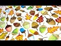 Painted Acorns | Enchanted Forest