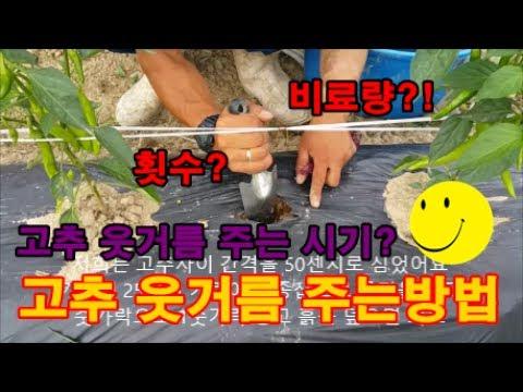 고추 재배 방법 고추 웃거름 비료주는 시기