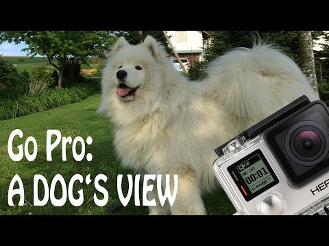 Go Pro: A Dog's View