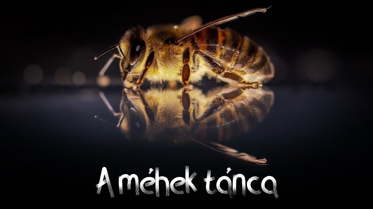The dance of the bees (A méhek tánca)