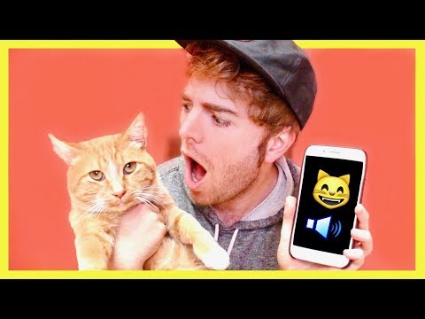 Thumbnail: TALKING TO MY CAT WITH A CAT TRANSLATOR