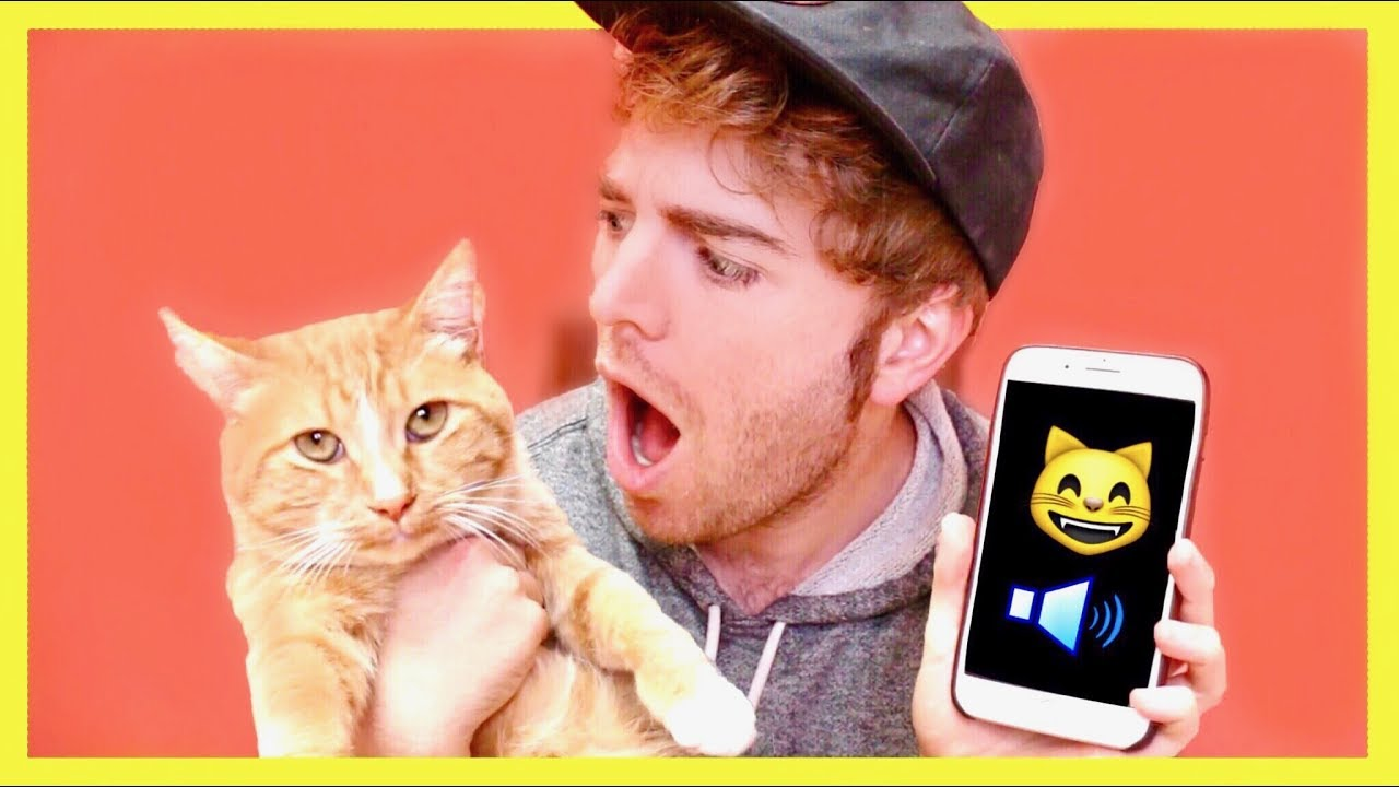 Sorry, But Let Me Explain Shane Dawson's Disturbing Cat Tweet