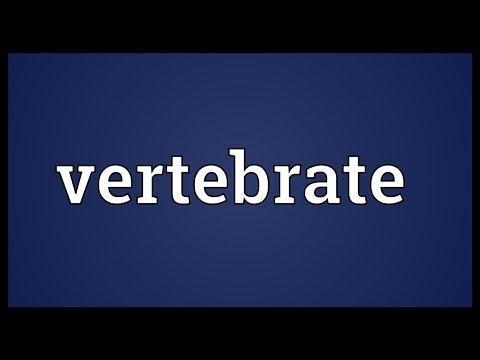 Vertebrate Meaning