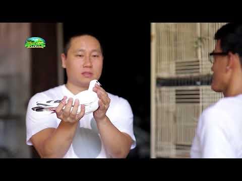 Alagang Magaling S8 EP9   FACE THE FANCIER   RANDY TAN