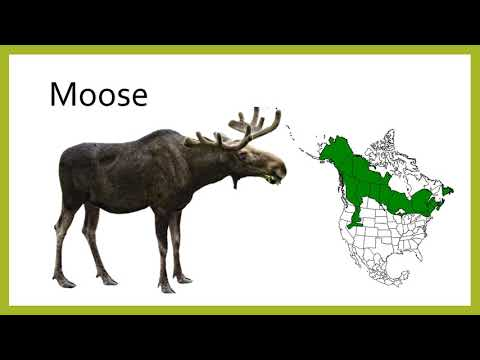 Endemic Mammals Of North America Flashcards