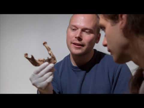 Ancient DNA cracks puzzle of Basque origins