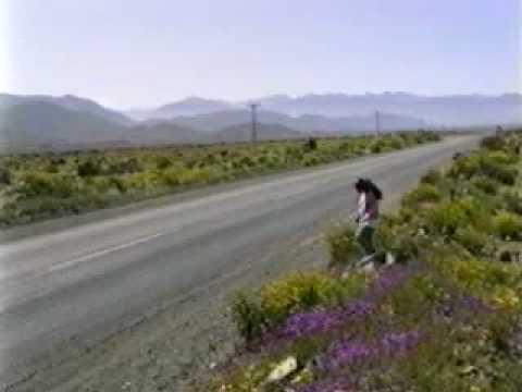 En el desierto de Atacama en Chile, si. Se produce de forma extraordinaria en pocas ocasiones a lo largo de los años. Pueden transcurrir siglos sin ver una gota de agua, pero cuando el fenómeno del Niño invierte esa tendencia, semillas que han estado cientos de años en estado latente, renacen en una explosión de color sin igual. De hecho muchas de esas flores son endémicas (únicas del lugar) . Si quieres fotografiarlo debes ir rápido porque las plantas dejan caer sus semillas muy rápido antes de que vuelva a secarse el terreno. La última floración fue en el 2015.