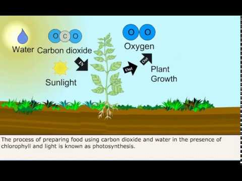 Class 7 Science Autotrophic Nutrition In Plants Youtube