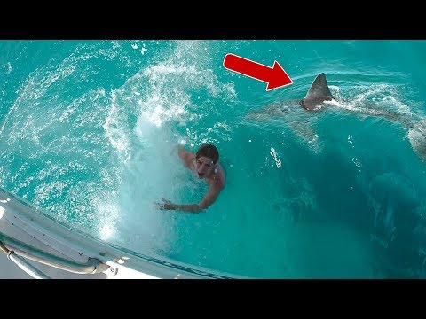 Thumbnail: SHARK PRANK WENT REAL!!