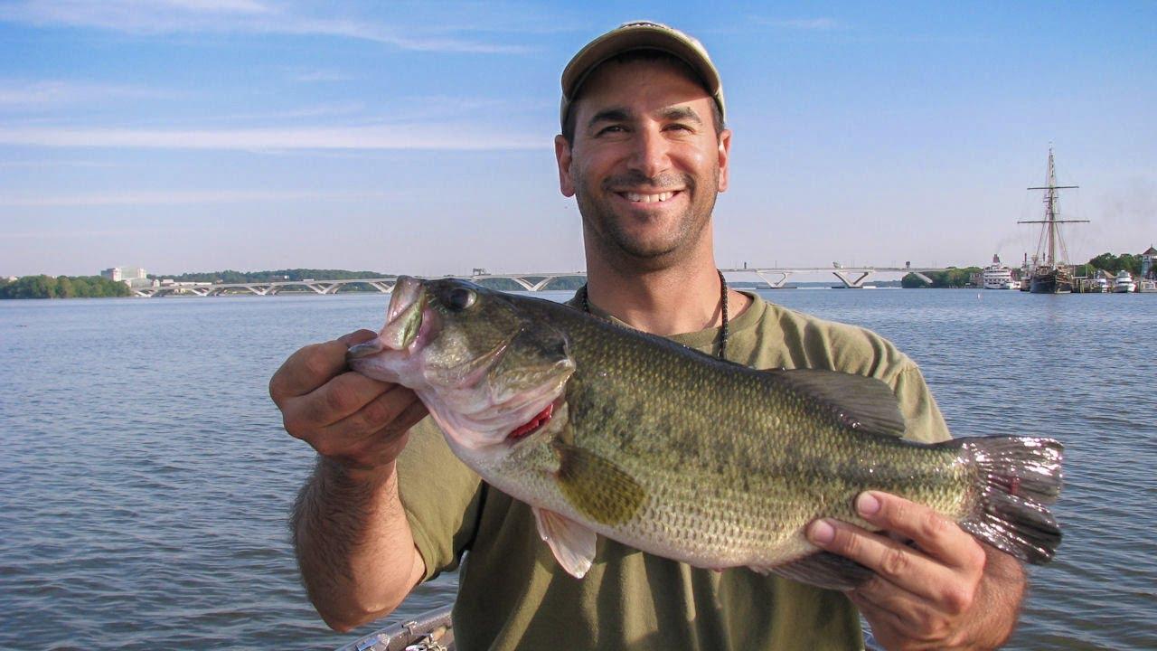 Potomac river bass fishing setting the hook youtube for Bass fishing washington