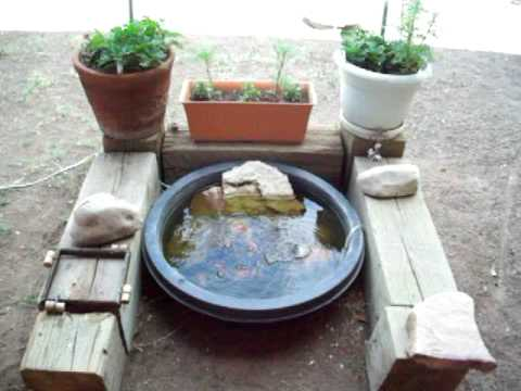 My small goldfish pond youtube for What fish can live with goldfish in a pond