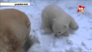 Белый медвежонок научился говорить слово «мама» в Новосибирске