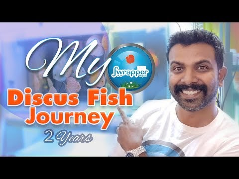 My Discus Fish Journey || Discus Fish Fry Growth In 2 Years