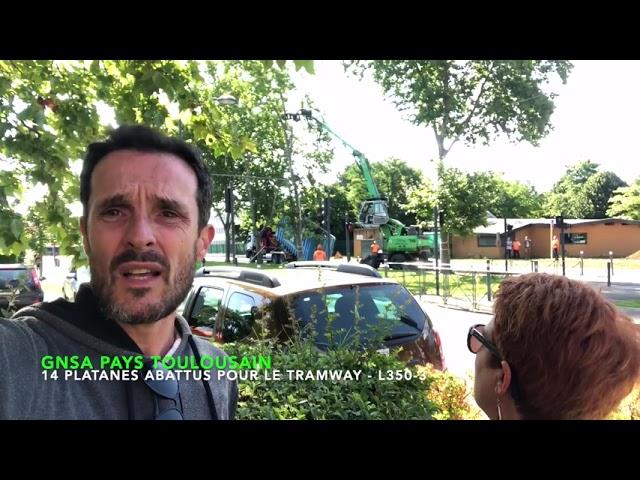 14 platanes abattus pour le tramway à Blagnac (à côté de Toulouse)