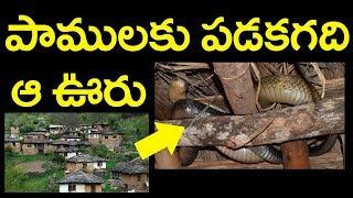 పాములకు పడక గది ఆ ఊరు | Snake Village | Magical Place | SumanTv