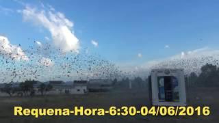 A C D Porto Requena-Hora-6:30-04/06/2016-PORTUGAL