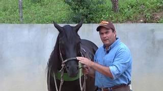 Como Escolher e Usar os Arreios para os Cavalos de Vaquejada