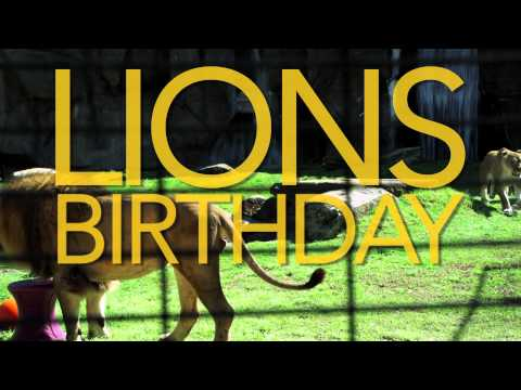 University of North Alabama Lions Birthday - 2013