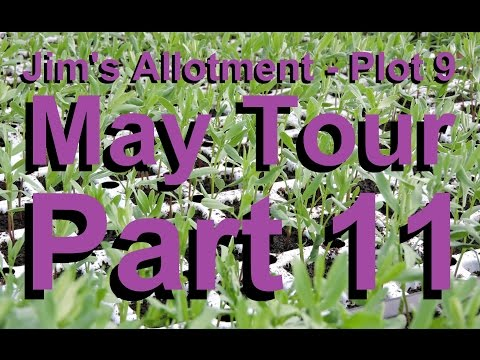 Jim's Allotment - Plot 9 - May Tour Part 11 - Chickpeas and Bumble Bees