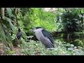2 HORAS com Sons da Natureza: Pássaros, Água Corrente, Riacho (HD)