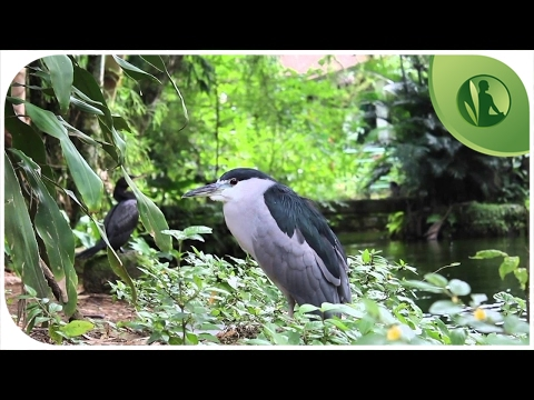2 HOURS with Sounds of Nature: Birds, Flowing Water, Stream (HD)