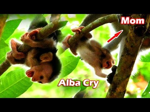 Poor Alba Nearly Fall From High Tree,Alba Cry Breaking Heart Why Mom Anna Not Take Care As Other Mom