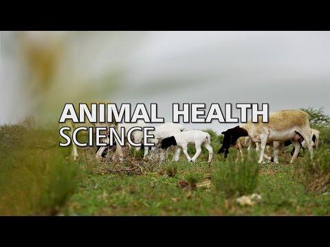 Animal Health Science | NWU Showcase