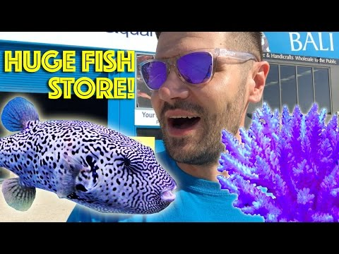 Majestic Aquarium, Australia Tour Part 1