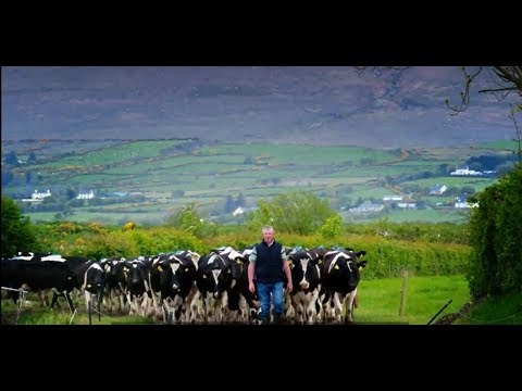Kerry's Dairy Heritage