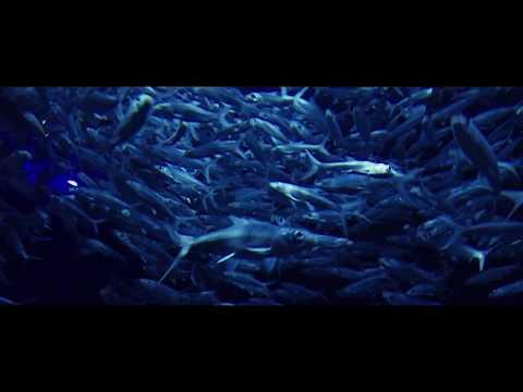 iPhone 7 Cinematic Video 4K - MACAU/ HONG KONG TRAVEL DIARIES (FiLMic Pro)