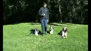 Hanrob Dog Training Sydney - Dealing With Distractions When Training Your Pet Dog.