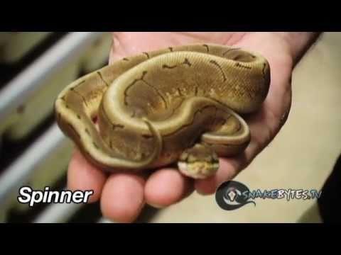 Snake bytes tv spiders and snake bites snakebytestv youtube