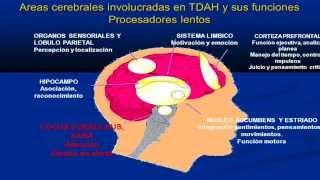 TDAH Trastorno por Déficit de Atención con Hiperactividad