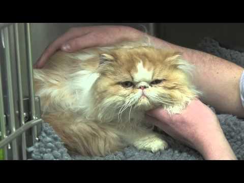 Vital Pet Insurance Tips