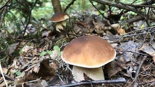 за грибами в смешанный лес  Сентябрь 2019