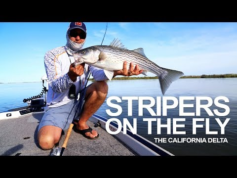 Fly Fishing for Striped Bass in the California Delta from YouTube · Duration:  5 minutes 22 seconds