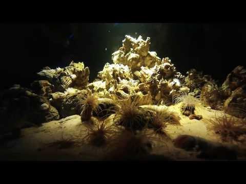 Ripley's Aquarium Canada in Toronto | Video Montage 01/11/2014