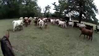 rassemblement du troupeau