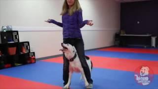 Танцующая собака