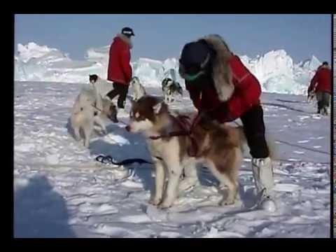 Skiing and Dog Sledding to the North Pole