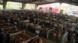 Événement : le marché aux bestiaux anime le printemps - Météo à la carte