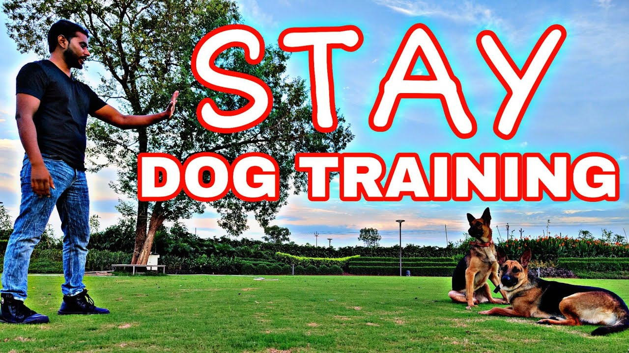 """German Shepherd Training Day 6 : How to train your dog """"Perfect Stay"""" Hindi (Jack & Jill)"""