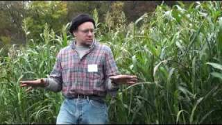 Sorghum Sudangrass as Summer Cover Crop