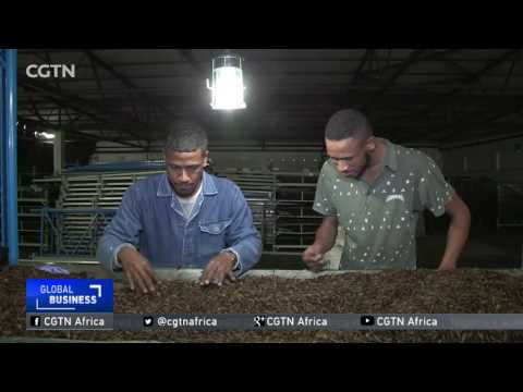 South Africa's agriculture sector adopts environment-friendly technology