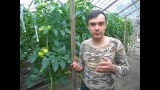 Ekonomia dla wszystkich cz.1 polskie pomidory tłumaczy Andrzej Pochylski