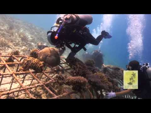 Coral Gardening at Hidden Reef, Gili Trawangan