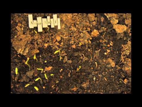 Амарант. Как всходят семяна, ускоренное видео